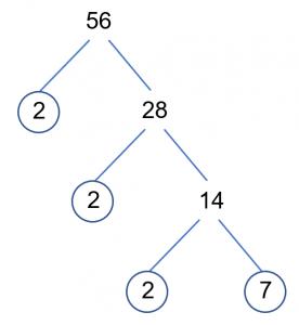 56 Factor Tree Complete